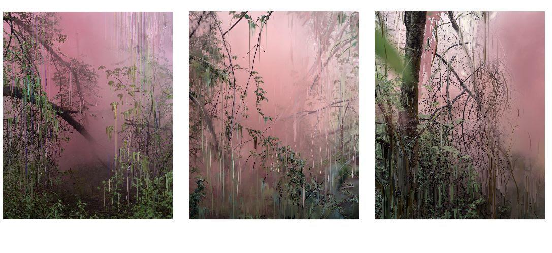 Untitled (Forest 17, 18, 19), 2019  © Sandra Kantanen
